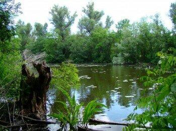 Озеро Домаха, затоки Днепра