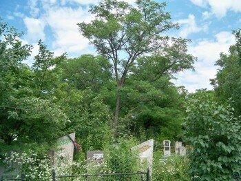 Осипенковское кладбище, г. Запорожье. Автор: Video-VV.