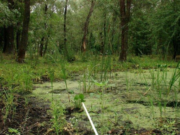 Разумовское болото.