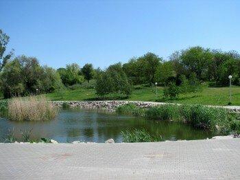 Красивый пруд с камышом и утками.
