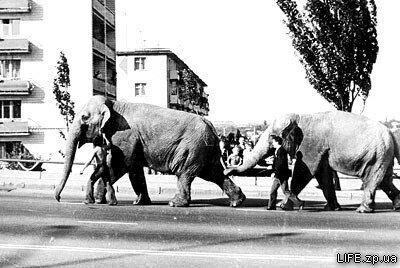 1972 год. По дамбе ведут слонов. Возможно, таким образом их «транспортировали» от железнодорожной станции до цирка.