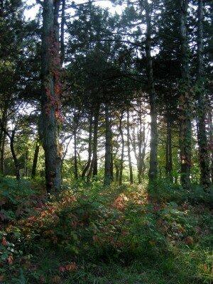 Лес на Хортице