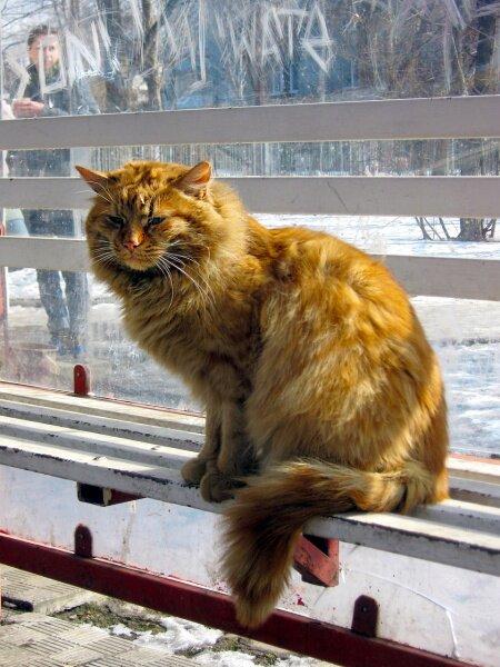 Глядя на нас таким взглядом, даже в марте месяце, он думает явно не о кошке.