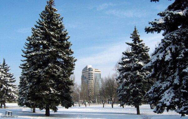 Площадь Фестивальная, парк.