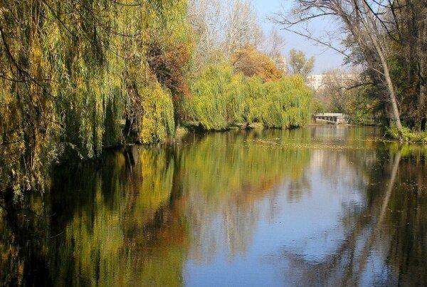 Красивая фотография парка Дубовая роща
