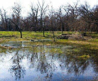 Заросшее озеро в дубовке