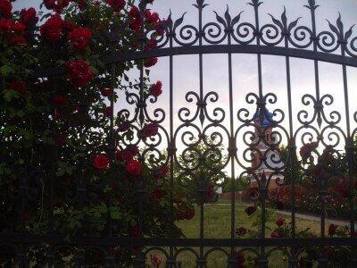 Вид на церковь Святого Николая (Бабурка) через розы, 2009 год