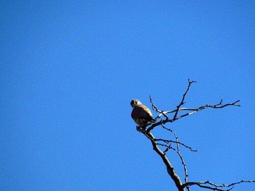 Птички на острове Хортица