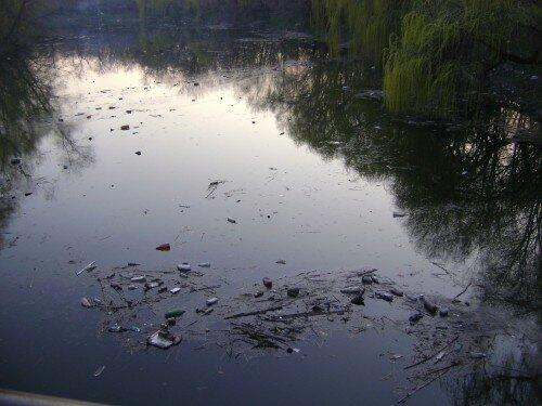 Вот столько мусора в нашем парке Дубовая роща