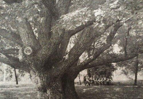 Дерево-патриарх, дерево-памятник