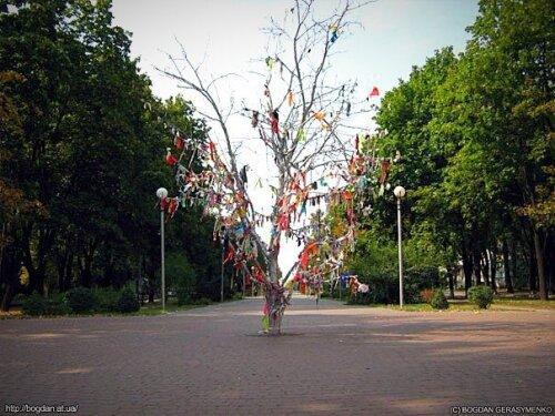 Дерево желаний на бульваре Шевченко. 17 мая 2008 года.