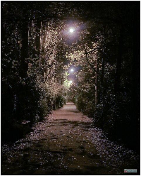 Улица Кремлёвская ночью