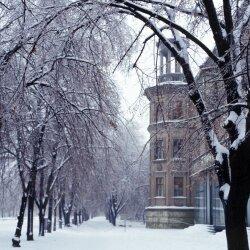 Снег, который шел всю ночь, покрыл землю, дома, машины белым пушистым покрывалом