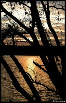 Вид сквозь деревья на ночной Днепр