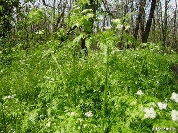 Весенняя трава на о. Хортица.