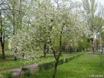 Весна пришла в наш город.
